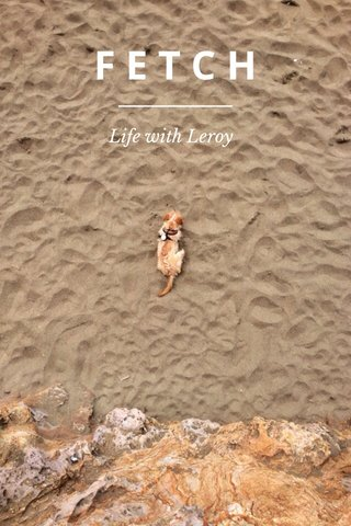 FETCH Life with Leroy