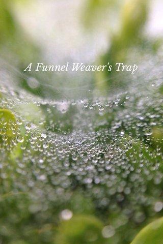 GRAND CANYON A Funnel Weaver's Trap