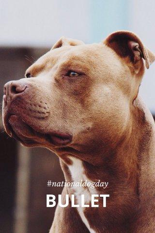 BULLET #nationaldogday