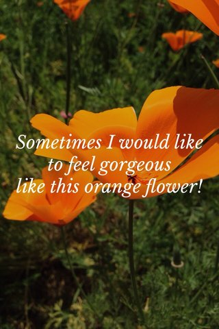 Sometimes I would like to feel gorgeous like this orange flower!