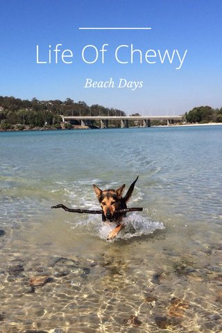 Life Of Chewy Beach Days