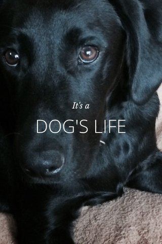 DOG'S LIFE It's a