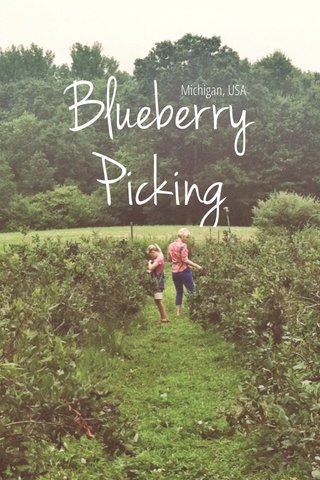 Blueberry Picking Michigan, USA