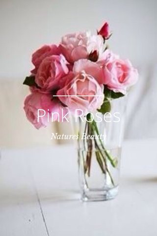 Pink Roses Natures Beauty