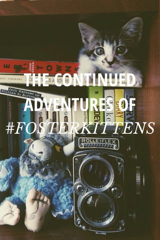 THE CONTINUED ADVENTURES OF #FOSTERKITTENS