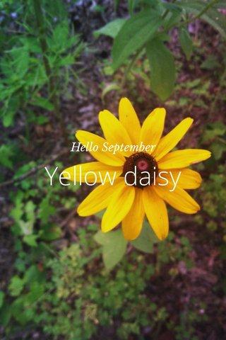 Yellow daisy Hello September