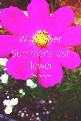 Wildflower Summer's last flower Fall is near