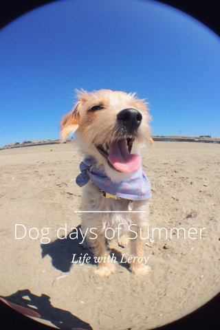 Dog days of Summer Life with Leroy