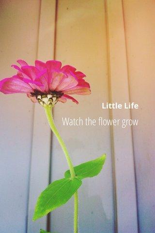 Watch the flower grow Little Life
