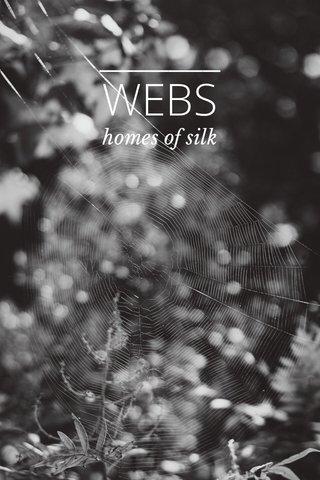 WEBS homes of silk
