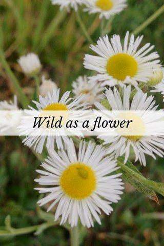 Wild as a flower