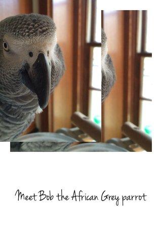 Meet Bob the African Grey parrot