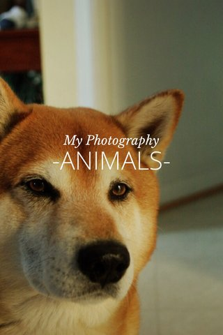 -ANIMALS- My Photography