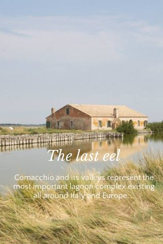 The last eel Comacchio and its valleys represent the most important lagoon complex existing all around Italy and Europe....
