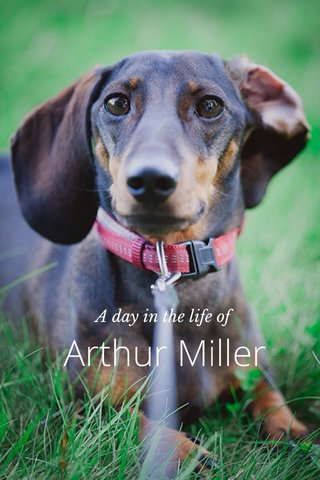 Arthur Miller A day in the life of