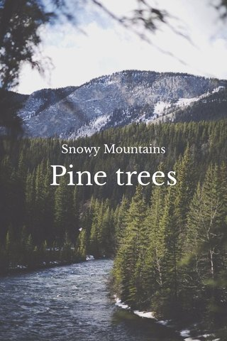 Pine trees Snowy Mountains