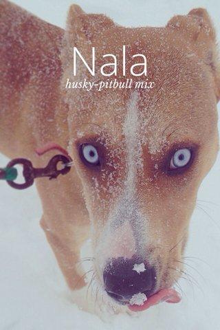 Nala husky-pitbull mix