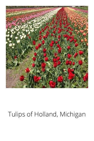 Tulips of Holland, Michigan