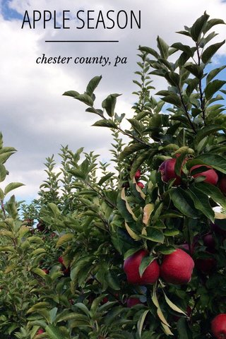 APPLE SEASON chester county, pa