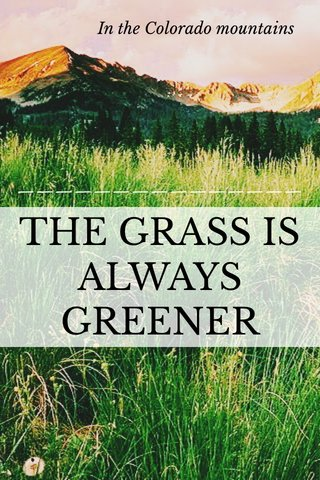 THE GRASS IS ALWAYS GREENER In the Colorado mountains