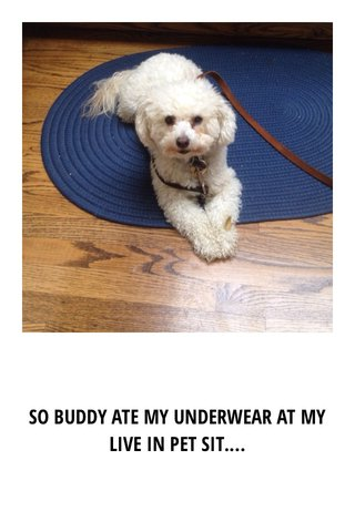 SO BUDDY ATE MY UNDERWEAR AT MY LIVE IN PET SIT....