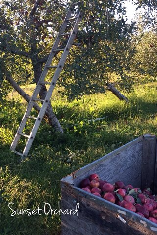 Sunset Orchard