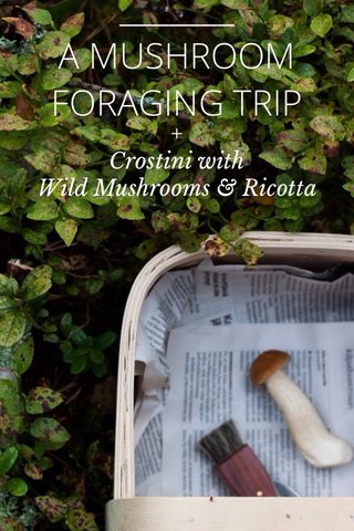A MUSHROOM FORAGING TRIP + Crostini with Wild Mushrooms & Ricotta