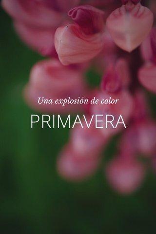 PRIMAVERA Una explosión de color