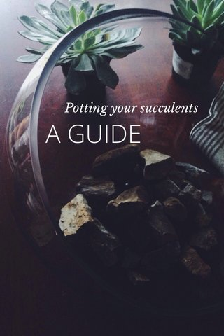 A GUIDE Potting your succulents