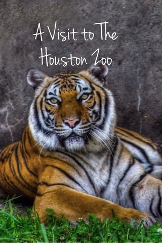 A Visit to The Houston Zoo