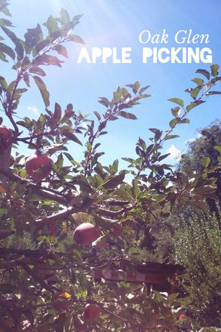 Apple Picking Oak Glen