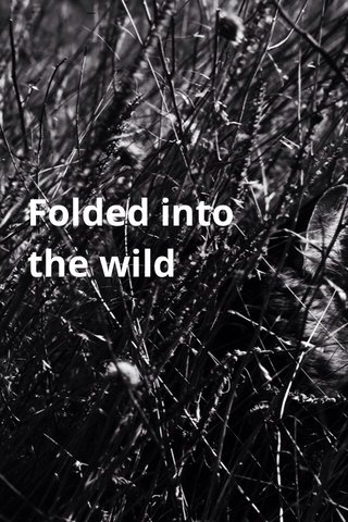 Folded into the wild