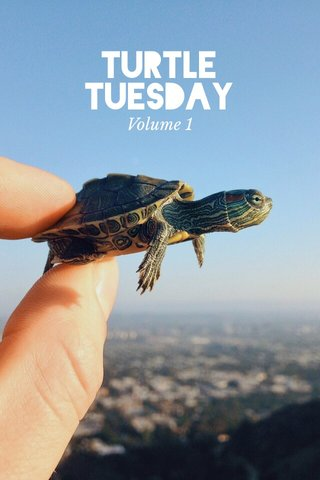 Turtle Tuesday Volume 1