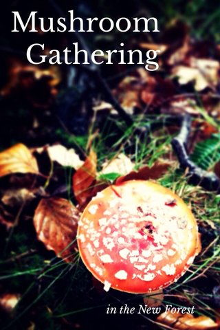 Mushroom Gathering in the New Forest