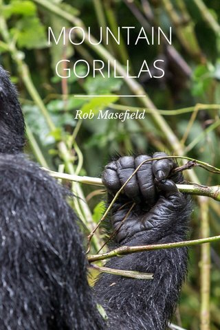 MOUNTAIN GORILLAS Rob Masefield