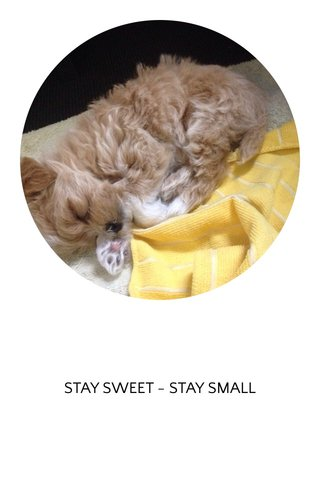STAY SWEET - STAY SMALL