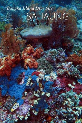 SAHAUNG Bangka Island Dive Site