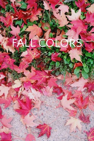 FALL COLORS >>>>>>>