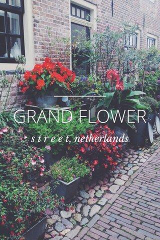 GRAND FLOWER s t r e e t, netherlands