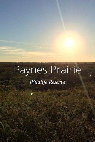 Paynes Prairie Wildlife Reserve