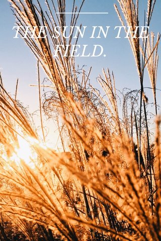 THE SUN IN THE FIELD.