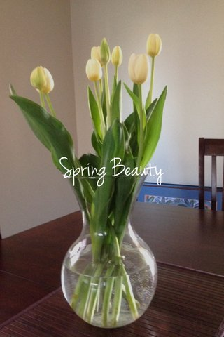 Spring Beauty