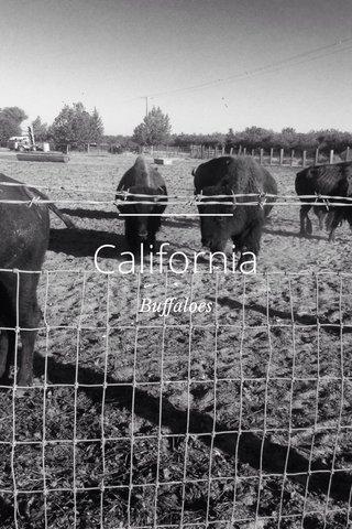 California Buffaloes