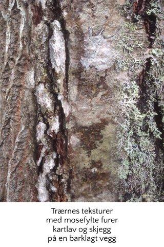Trærnes teksturer med mosefylte furer kartlav og skjegg på en barklagt vegg