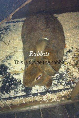 Rabbits This is fudge the rabbit