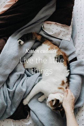Live the little things Kitten cuddles