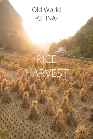 RICE HARVEST Old World -CHINA-