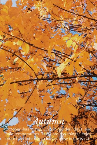Autumn October has given Lincoln golden days and mild temperatures. There are few things I enjoy more than listening to leaves blow in the wind.