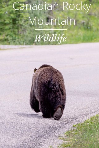 Canadian Rocky Mountain Wildlife