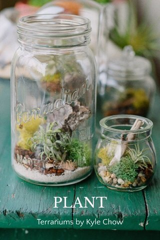 PLANT Terrariums by Kyle Chow